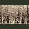 Coppet's Wood #3