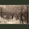 Coppet's Wood #1
