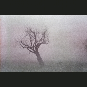 NegFile1081_0031_fog #8