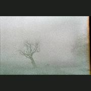 NegFile1077_002_fog6