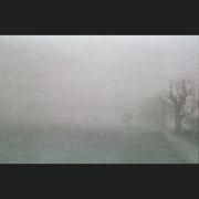 NegFile1081_0021_fog #2