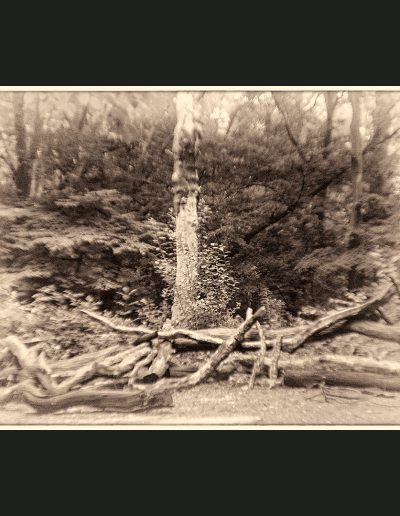 Queen's Wood Material : Archival Giclee Edition: limited 10 Dimensions : 75cm X 48cm