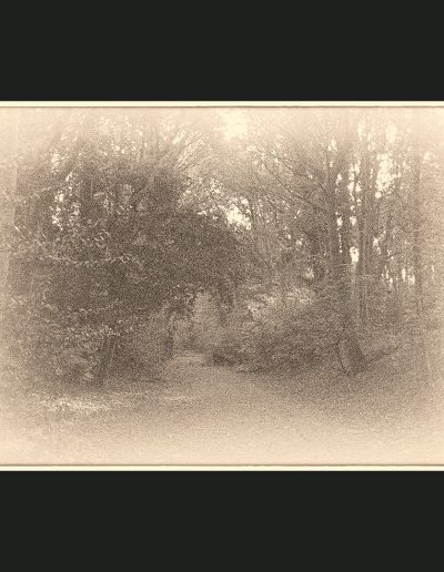Title: parkland Walk #2 Material : Archival Giclee Edition: limited 10 Dimensions : 75cm X 48cm